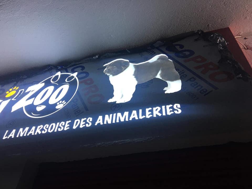 Habillage façade Panneau enseigne lumineuse animalerie marrakech